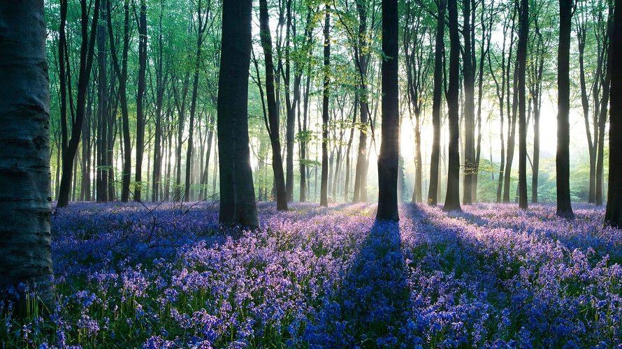 La foresta del giovane Rodin
