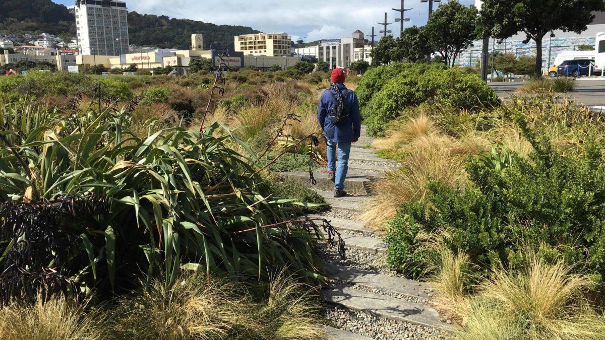 Il Waitangi Park a Wellington