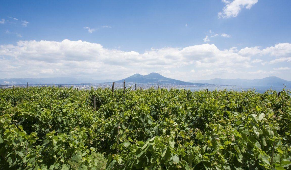 La Vigna di San Martino a Napoli