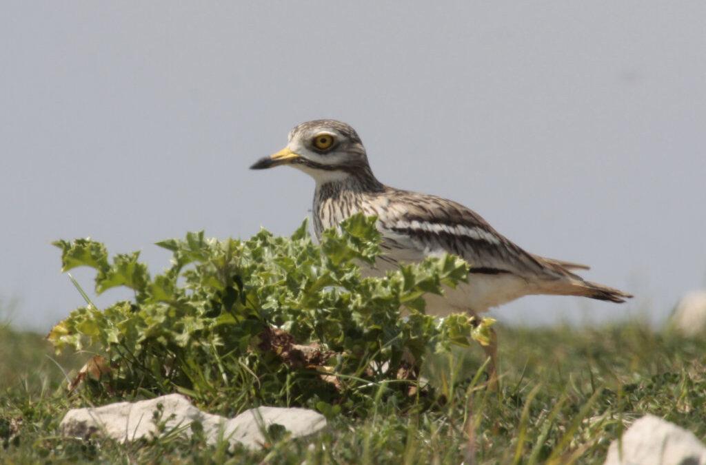 Dialogo tra un ornitologo e un botanico